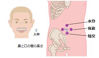 腎臓ツボ1