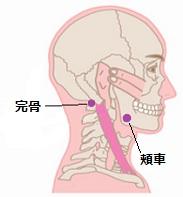 顎関節症ツボ1